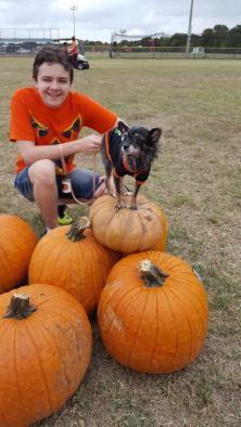 pumpkinpalooza6