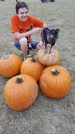 pumpkinpalooza7